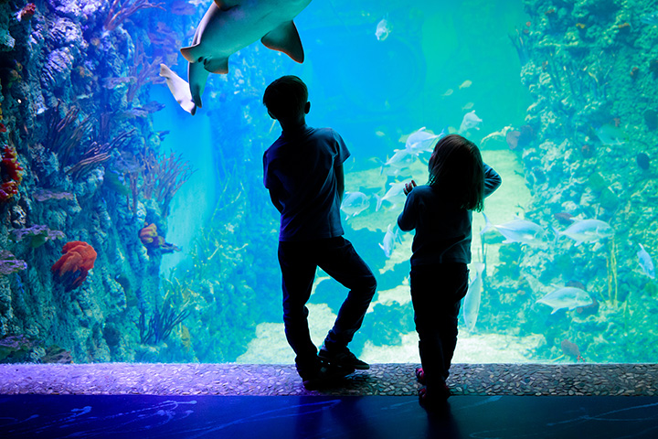 The Tennessee Aquarium