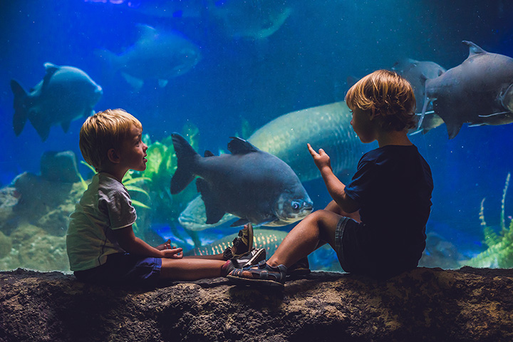 Point Defiance Zoo And Aquarium