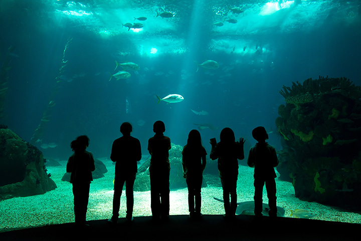 North Carolina Aquarium - Fort Fisher