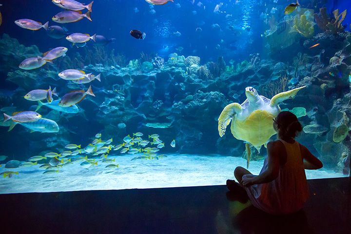 The Pier Aquarium