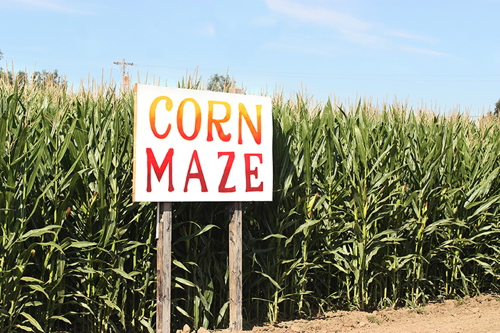 Crab Orchard Corn Maze & Pisgah Pumpkin Patch