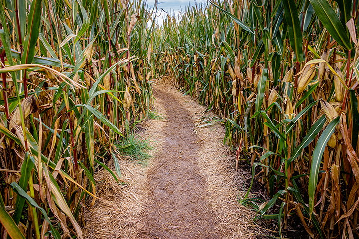 Hubb's Farm Fall Festival and Corn Maze