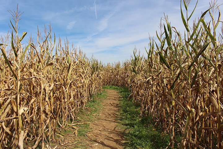 Haunted Shack And Ru-Ridge Corn Maze Attractions