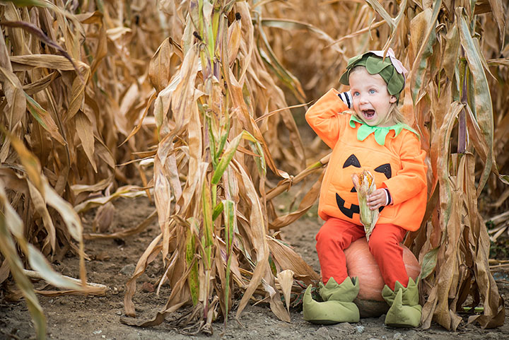 Hazel's Pumpkin Patch & Corn Maze
