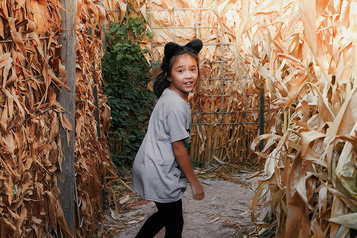 Derthick's Corn Maze and Farm Experience