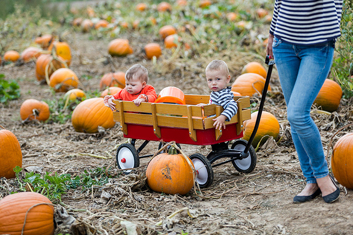 Steele's Pumpkin Patch And Corn Maze