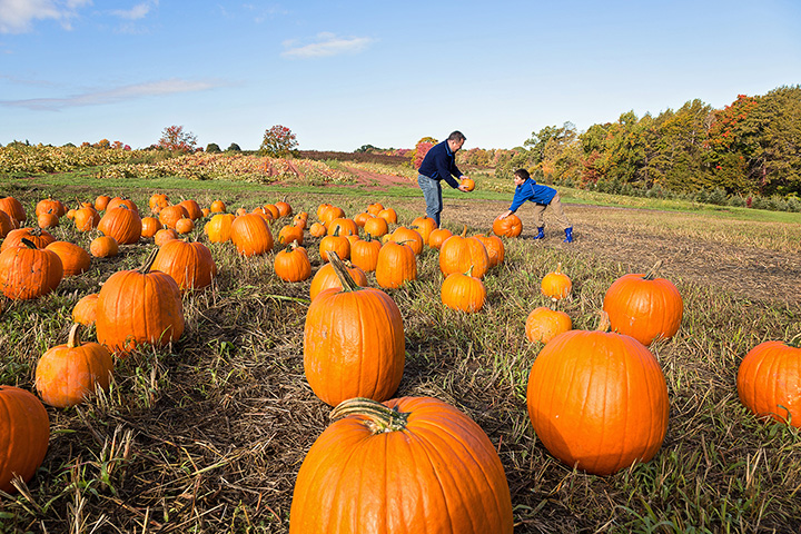 Cheap Charlie's Pumpkins at Dee John's