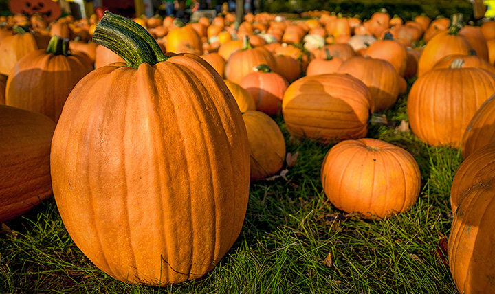 Lions Club Pumpkin Patch