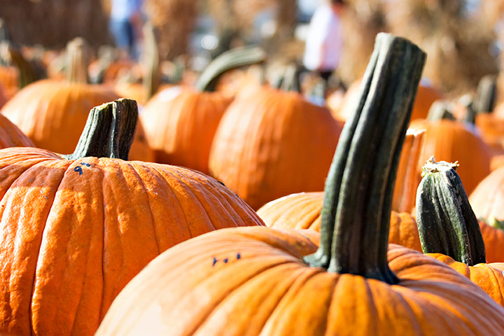 Pumpkin Days - Family-Friendly Not-so-Scary Halloween