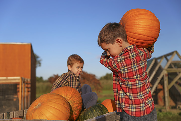 Rogers Pumpkin Farm