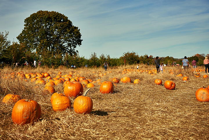 Bills' Pumpkin Patch