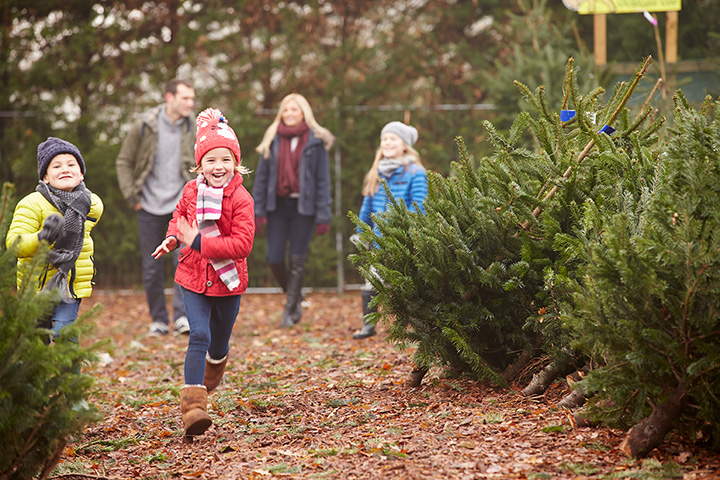 Ousterhout Christmas Tree Farm