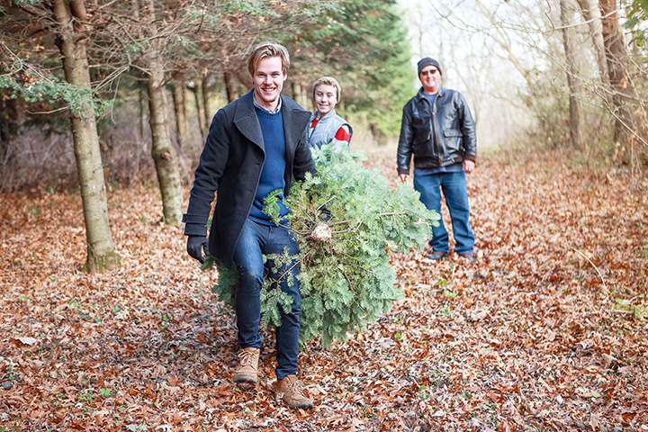 Bambi's Christmas Trees Land At Oak Avenue