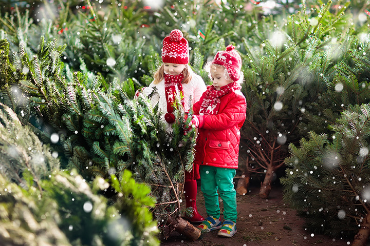 Freckleton's Tree Farm