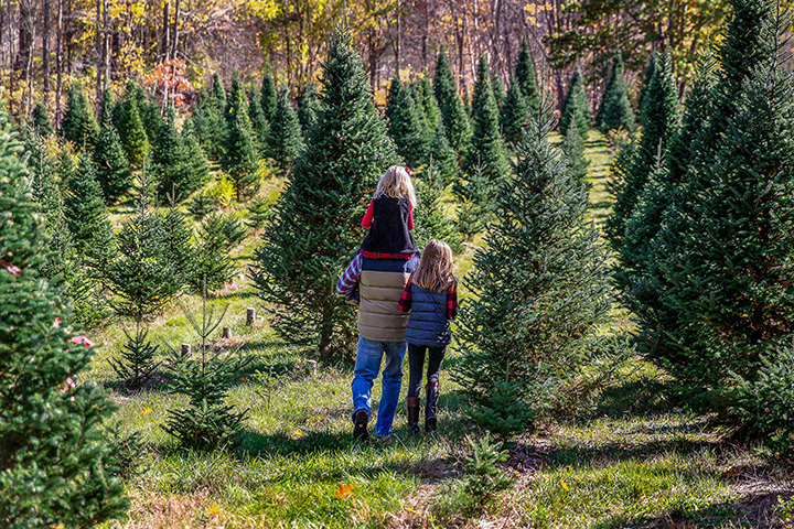 Rector Ridge Tree Farm