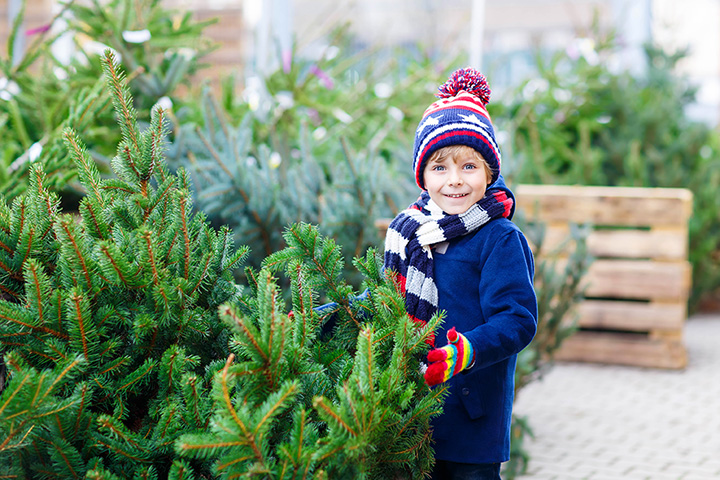 Horley Choose and Cut Christmas Tree Farm