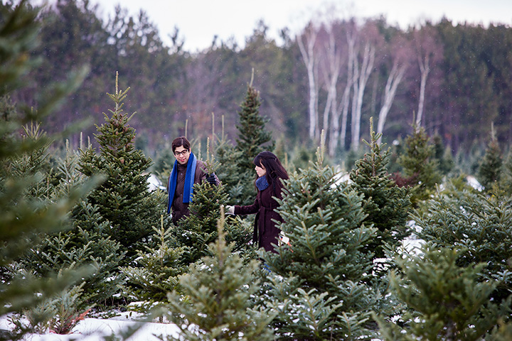 Yetter Road Christmas Tree Farm